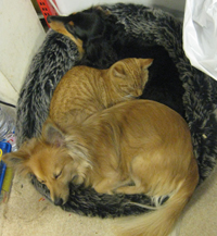 cat and dogs in bed